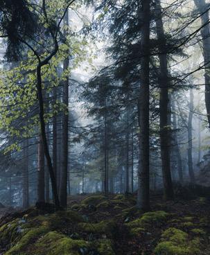 Wald im Morgen