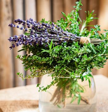 Lavendel Detailbild