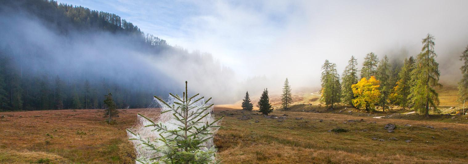 Almwiese an einem Herbstmorgen
