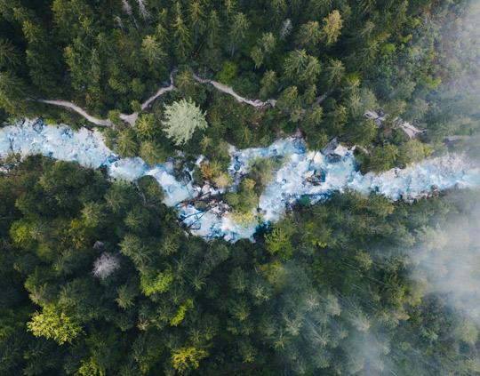 Wald mit Bach von Oben
