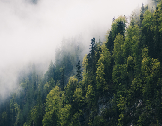 Wetter Nebel