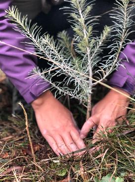 Baumpflanzhotel vom nachhaltiges Hotel