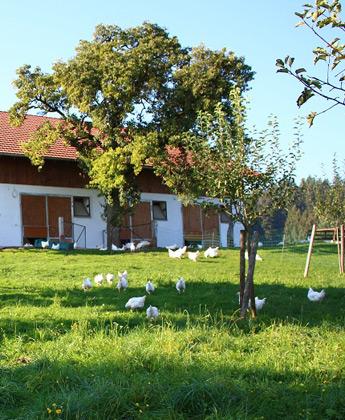 Hühnerstall Posch