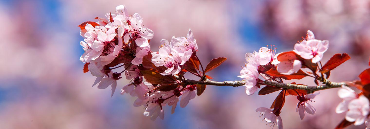 Blumen blüte